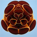 Pipe flower